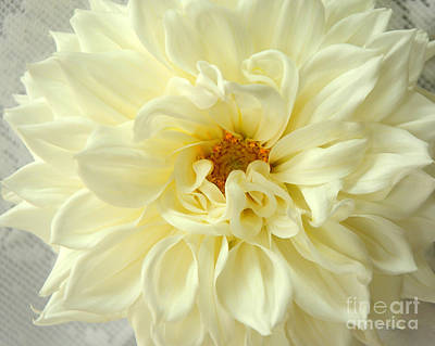 Art Print featuring the photograph White Dahlia by Olivia Hardwicke