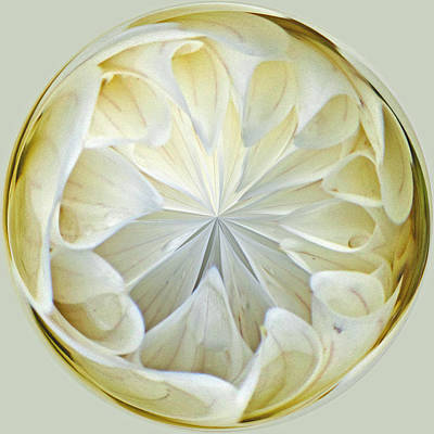 Photograph - White Dahlia Orb by Tikvah's Hope