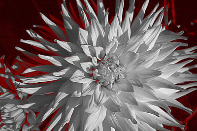 Art Print featuring the digital art White Dahlia by Richard Farrington