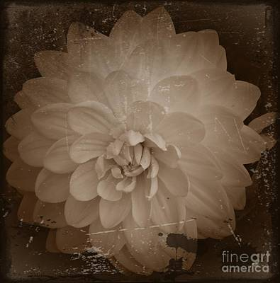 Aster Mixed Media - White Dahlia Sepia 2 by Chalet Roome-Rigdon