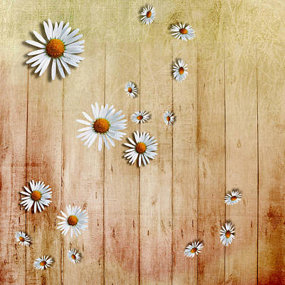 White Daisies Art Print by David Ridley