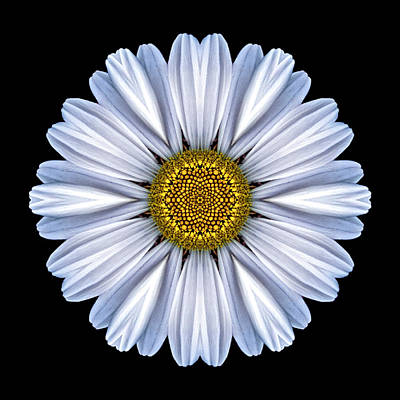 Photograph - White Daisy Flower Mandala by David J Bookbinder