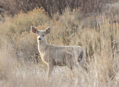 Photograph - White Deer by Loree Johnson