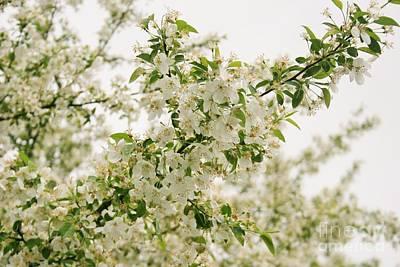 Photograph - White Dogwood In Bloom by Martha Burton