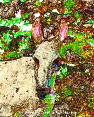 White Donkey-owner Of Hills Art Print by Dr Loifer Vladimir