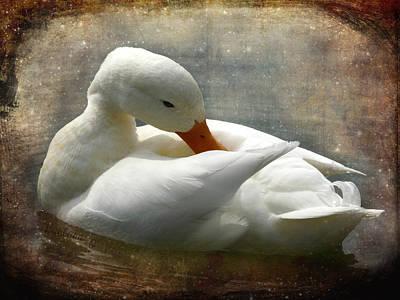 White Duck Art Print by Barbara Orenya