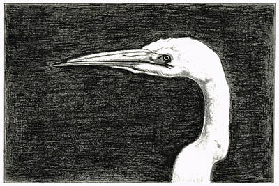 Herons Drawing - White Egret Art - The Great One - By Sharon Cummings by Sharon Cummings