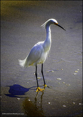 Photograph - White Egret At The Beach In  San Francisco Bay by LeeAnn McLaneGoetz McLaneGoetzStudioLLCcom