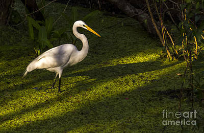 White Egret Art Print by Marvin Spates
