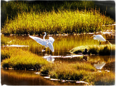 Photograph - White Egrets by Frank Winters