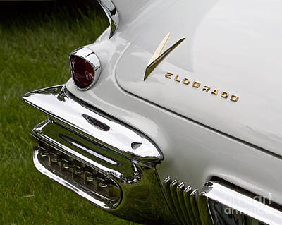 Photograph - White Eldorado by Dennis Hedberg