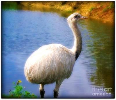 Emu Digital Art - White Emu by Meagan Hoelzer