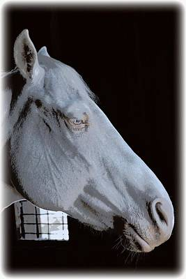 Photograph - White Equine Profile by Sheri McLeroy