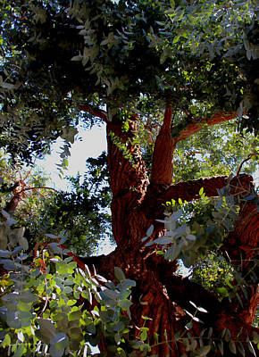 White Eucalyptus 2 Art Print by Jennifer Muller