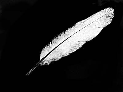 Digital Art - White Feather by Expressionistart studio Priscilla Batzell