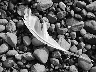 Photograph - White Feather by Gerry Bates