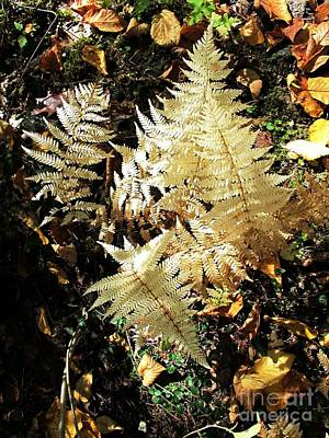 Photograph - White Ferns by Linda Marcille