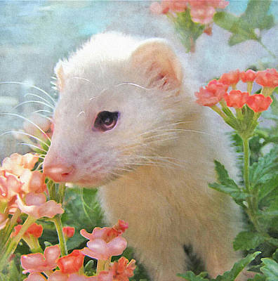 Digital Art - White Ferret by Jane Schnetlage