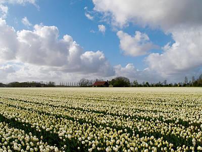 Art Print featuring the photograph White Field by Luc Van de Steeg