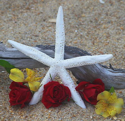 Shells Photograph - White Finger Starfish And Flowers 2 by Cathy Lindsey