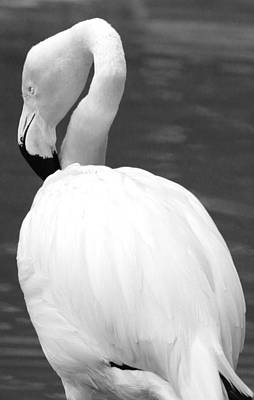 Photograph - White Flamingo by Jp Grace