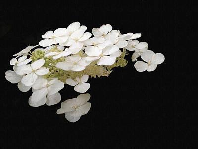 White Floral Canvas Art Print by Dennis Buckman