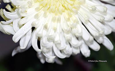 Surrealism Royalty Free Images - White Flower Art Dahlia. Royalty-Free Image by Vishesh Gaur