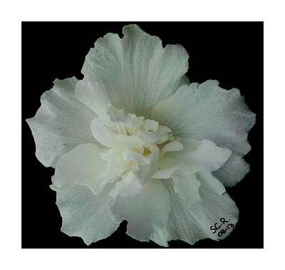 Art Print featuring the photograph White Flower By Saribelle Rodriguez by Saribelle Rodriguez