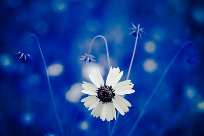 Photograph - White Flower by Darryl Dalton