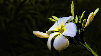 Photograph - White Flower by Don Durfee