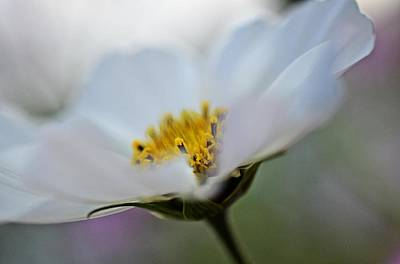 Mills Photograph - White Flower - Fine Art Macro Photography by Marianna Mills