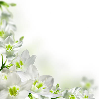 Deer Resistant Flowers Photograph - White Flower Frames by Boon Mee