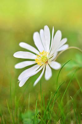 White Flower Art Print by Gynt
