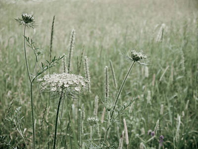 White Flower In A Meadow Art Print by Rob Huntley