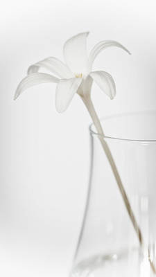 Photograph - White Flower In A Vase by Zoe Ferrie