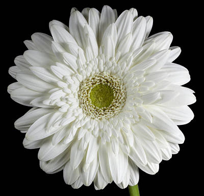 Photograph - White Flower by John Crothers