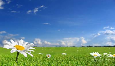 White Flower Landscape Art Print