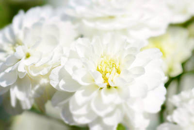 Florid Mixed Media - White Flower Macro by Tommytechno Sweden