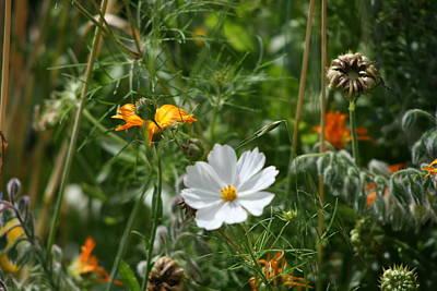 Photograph - White Flower by Phoenix De Vries
