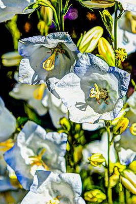 Photograph - White Flower Spendor by Chris McKenna