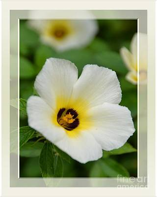Photograph - White Flower- Up Front by Darla Wood