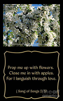 Verse Photograph - White Flowering Crabapple With Song Of Songs Quote by Rose Santuci-Sofranko