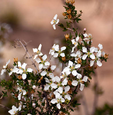 Photograph - White Flowers by Eric Rundle