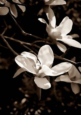 Photograph - White Flowers by Lisa Kaye