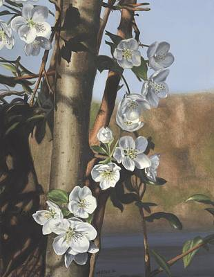 White Flowers Art Print by Michele Renee