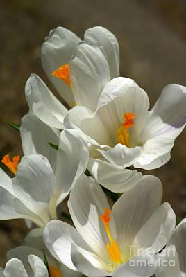 White Flowers Art Print by Nur Roy