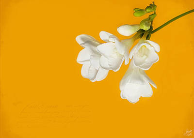 Art Print featuring the photograph White Flowers On Tangerine Study by Lisa Knechtel