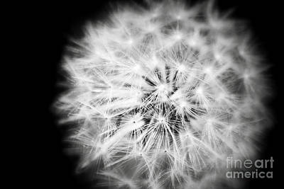 Photograph - White Fluffy Dandelion  by Jerry Cowart