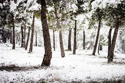 Christmas Holiday Scenery Photograph - White Forest by Marc Garrido