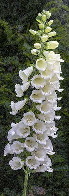 Digital Art - White Foxglove Flower by Photographic Art by Russel Ray Photos